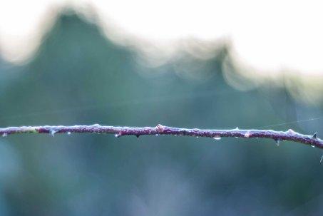 Hilo de seda, rama de agua